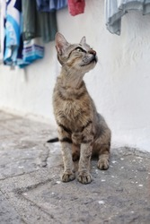 Young Feral Cat in the Street of Lindos in Greece. Greek Stray Kitten Sits on the Ground Outside.
