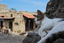 Young Feral Cat Resting on Stone in Old Town Rhodes. Cute Stray Kitten Lies Down on Rock on Greek Street.