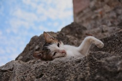 Young Feral Cat Rests on Stone in Rhodes Town. Tired Feral Kitten Lies Down in Greece.