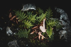 young fern leaves forest background