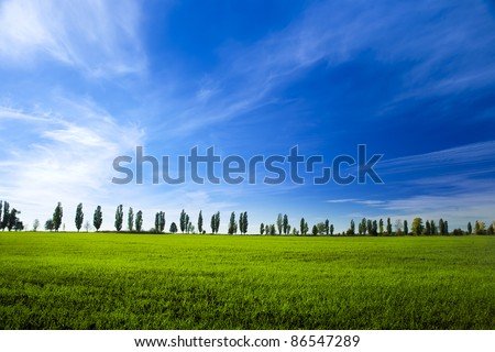 young field of winter wheat on blue sky background