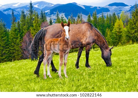 Young foal and mare eating grass on meadow at mountains landscape