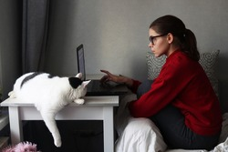 Young focused female freelancer working at the computer sitting on the couch at home. A large white cat is sleeping next to her. Working from home, living in quarantine, self-isolation