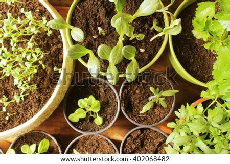 Young fresh seedlings