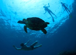 Young friends having fun in a tropical sea with turtle