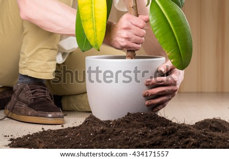 Young gardener transplanting a plant in fertile soil and new big flowerpot #434171557