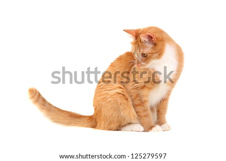 Young ginger cat on a white background