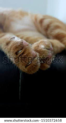 Young ginger cat's paws lying on brown leather sofa.