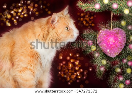 Young ginger cat, surprised looks at the Christmas tree on a festive background