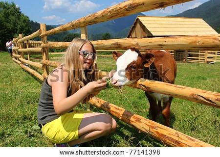 young girl feeding calf