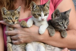 young girl holding three beautiful kittens outdoor adoption concept