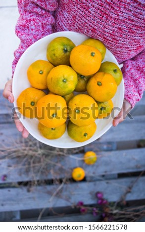 Young girl holds homegrown tangerines.