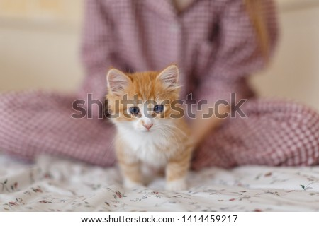 Young girl in pajamas stroke small fluffy ginger kitten with blue eyes in cozy home. Playful kitty want to play. Selective focus on feline muzzle. Lovely little pet. Domestic animals concept. #1414459217