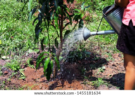 Young girl is planting a mango tree with defocused blur background - growing fruit tree - agricultural plants cultivation #1455181634