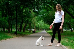 Young girl is walking with her dog on a retractable leash on asphalt sidewalk. Little white puppy Husky 2 months old in summer park