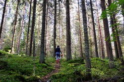Young girl looking for mushrooms in a forest. Mushroom hunting, mushrooming, mushroom picking and mushroom foraging describe the activity of gathering mushrooms in the wild. Forest therapy is healing.