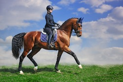 Young girl on bay dressage stallion outdoor