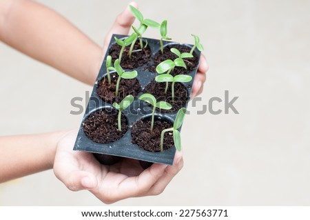 young girl\'s  hands holding green sprout growing from seed. seed germination. New life, spring and ecology concept