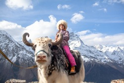 Young girl take photo on the yak on the mounysin against the backdrop of mountain peaks with snow. Photo on or with animal for money. Exploitation of animal labor concept.