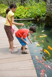 Young girl with her young brother feeding colorful Koi carps in tropical pond.