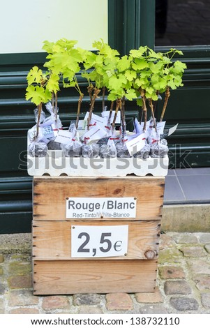 Young grape shoots separated in plastic bags available for sale in St-Emilion, France