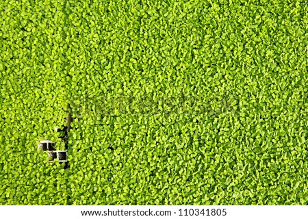 Young green herbs background