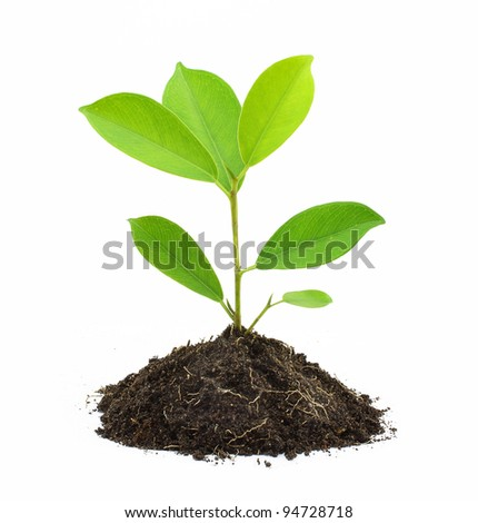Young Green Plant and Soil Isolated on white background.