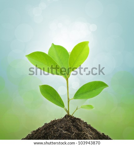 Young Green Plant and Soil on Green background.