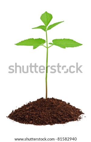 Young green plant growing from soil isolated on white background