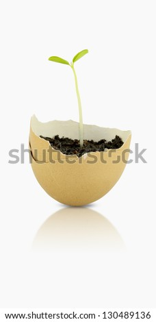 Young Green plant is growing in an eggshell. - stock photo