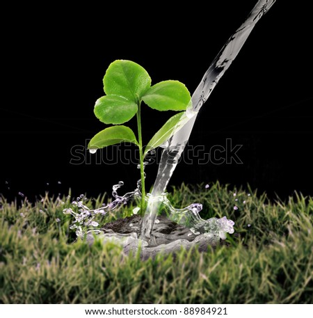 young green plant with water on it growing