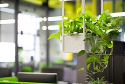 Young green plants in pots in eco office interior, blurred background, copy space