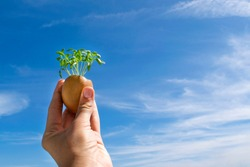 Young green shoots of egg shell on blue sky background, the concept of the origin of life