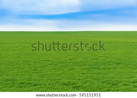 Young green wheat field on a nice spring day #595151951