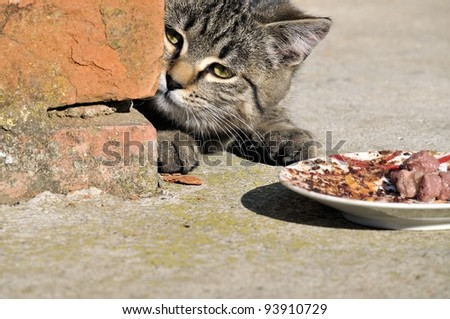 Young grey cat and her food