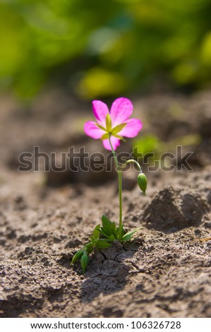 Young growing flower in a desert sand