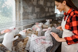 Young happy woman farmer is looking at the metal cages with white rabbits in her farm. The farmer takes care of the animals. Bio meat concept