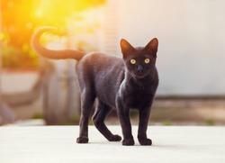young homeless black cat looking at camera