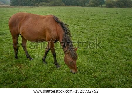 Young horse foal grazing grass. Pasture grassland in Beskid Niski area in Poland, Europe. Zdjęcia stock ©