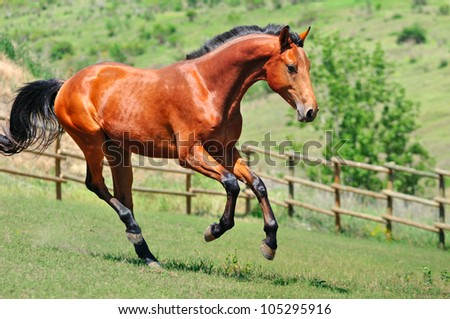 Young horse running in the field