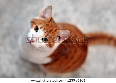 Young hungry cat looking for food - stock photo