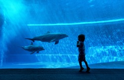 Young kid looking at doplhins swimming in an aquarium