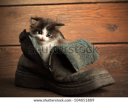 young kitten in old boot