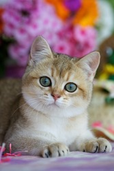 Young kitten lying on a blanket among the flowers
