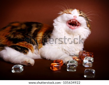 young kitten playing with glass cubes on brown background