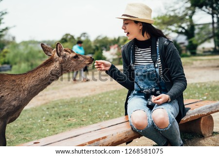 young lady tourist lens man sitting on bench wooden chair in nara park feeding hungry mammal. brown sika deer in japan wild nature on grass ground on sunny day. freedom animal eating lifestyle.