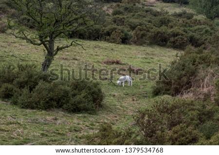 Young lamb on hillside Long Mynd, Church Stretton, Shropshire #1379534768