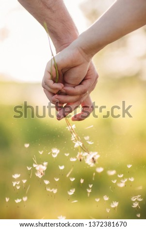 Young loving couple holding hands each other with bouquet of yellow dandelions in summer park, view of hands. A pair of hands holds a dandelion.