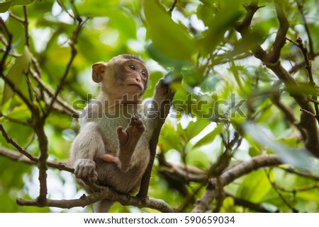 Young macaque monkey on branch