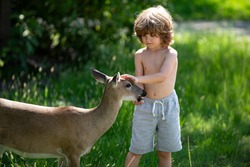 Young male deer walks in the park and eats from the hands of children. Deers bambi and wild animals concept. Child on nature